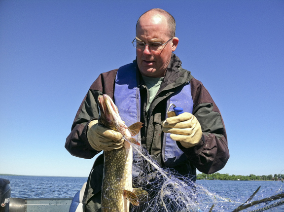 walleye_population_2.jpg