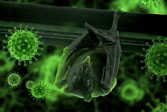 bat hanging upside down with covid virus over lay